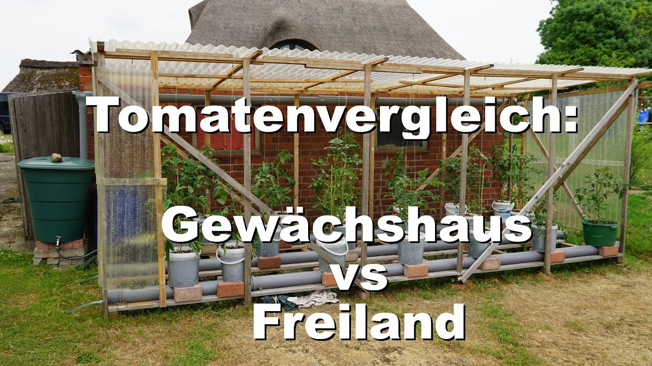 rundgang durch den garten tomaten im freiland vs gew chshaus youtube. Black Bedroom Furniture Sets. Home Design Ideas