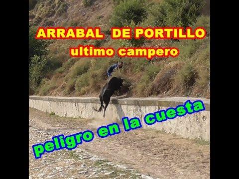 ARRABAL de Portillo (Va), 6º ENCIERRO CAMPERO. 14/09/2018