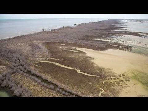 Why Unprecedented Dieoff Mangroves Australia Also Great Barrier Reef 50% Dead
