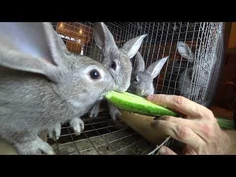 Как кормить кроликов тыквой