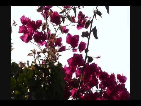 Les roses et MF si jetais une note de musique 0001