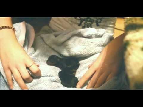 Беременность и роды той-терьера