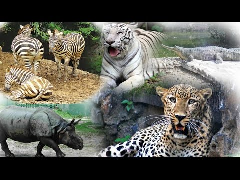 A Journey to Kolkata Alipore Zoological Garden Part - I