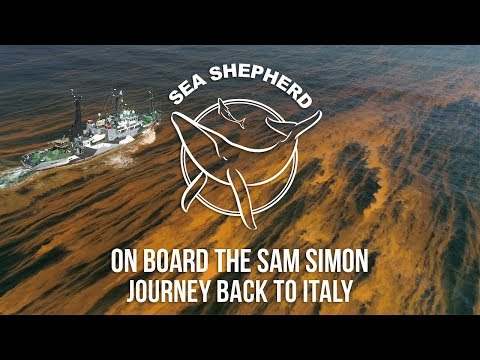 On Board the Sam Simon: Journey Back to Italy