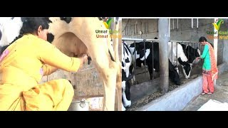 Dairy farming | No America No Canada my native land India is best  | Story of Dawinder Kaur