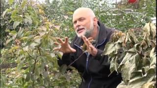 видео Подготовка к зиме, Дачные вопросы