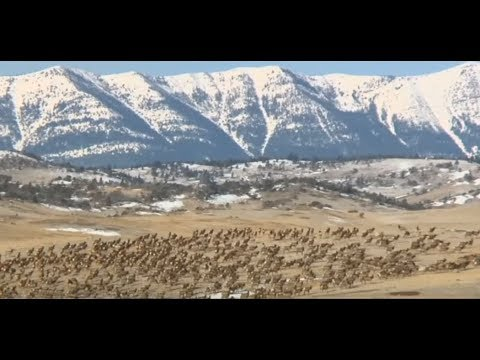 Elk numbers grow in north end of Yellowstone