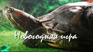 Новогодняя игра с красноухой черепахой) Конкурс! Все участвуем)/Christmas game with turtle) Contest!