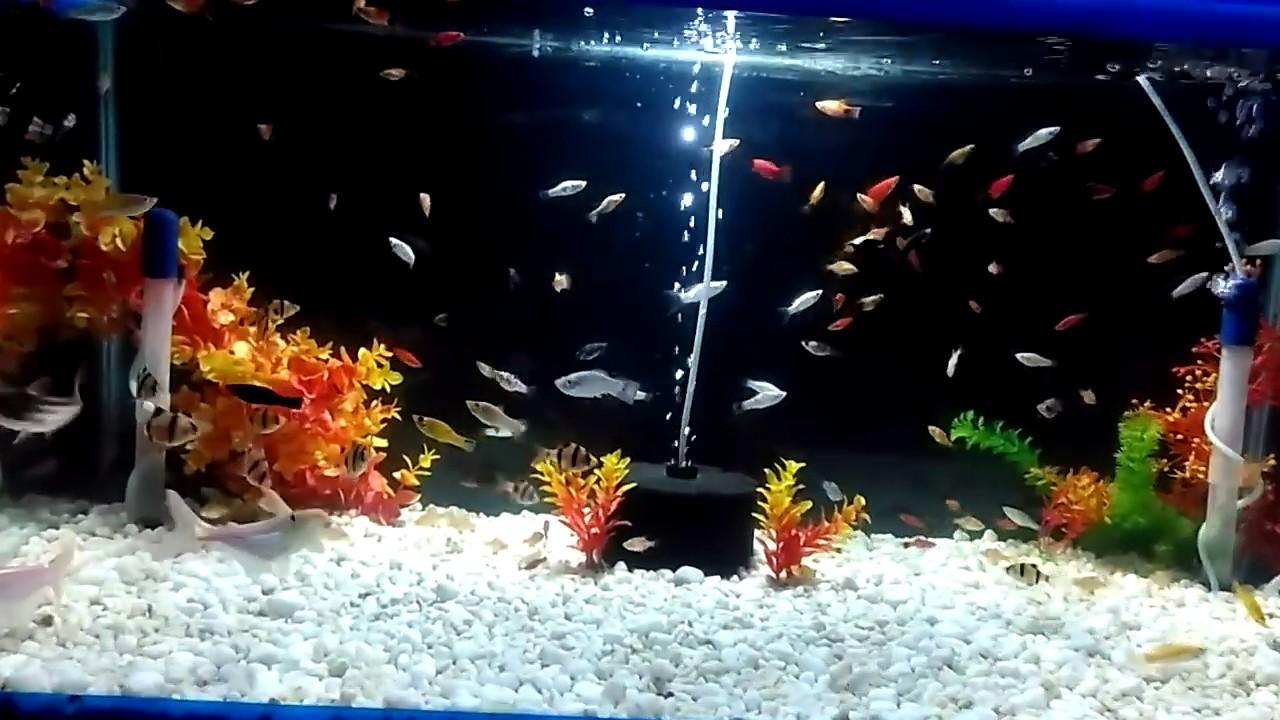 Small Fish Aquarium Tank Youtube