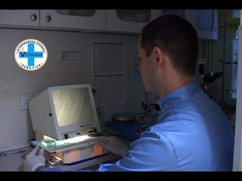 Počeo svinjokolj - kontrolišite meso na trihinelu - Mario Tikvicki, YuEco RTV, trihineloza