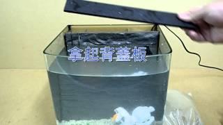 小丑魚魚缸開缸教學