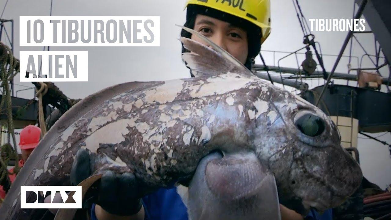 Estos son los 10 tiburones más alucinantes descubiertos recientemente