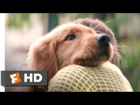 A Dog's Purpose (2017) - I Had a Boy Scene (1/10) | Movieclips