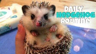 Hedgehog Care: Daily Hedgehog Routine