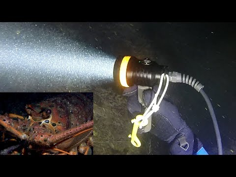 OrcaTorch D630 Tec Dive Light Review While Lobster Hunting