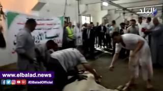 محافظ بني سويف يشهد ذبح 100 عجل من 'الأورمان' و'مصر الخير' ..فيديو وصور