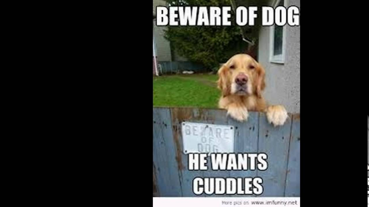 Funny Dog Quotes You
