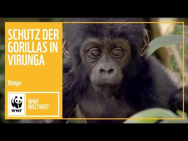 Kongo: Schutz der Gorillas in Virunga | WWF Weltweit | WWF Deutschland
