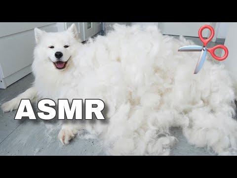 ASMR Relaxing Dog Grooming 🐶✂️ I MAYASMR