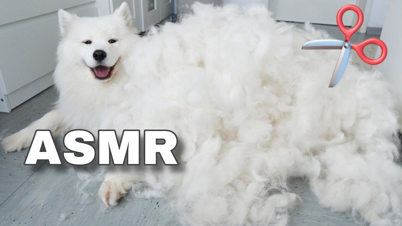 ASMR Relaxing Dog Grooming ????✂️ I MAYASMR