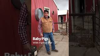 Farmer Pat with baby pigs