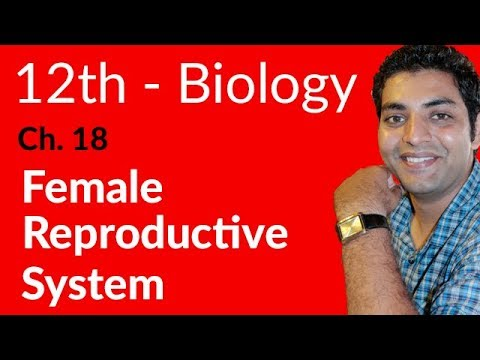 Female Reproductive System Biology - Biology Chapter 18 Reproduction - FSC Part 2 Pre Medical