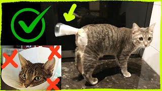 Degloved Cat Tail Injury: Tail Bandage for Chronic Injury (No Neck Cone/ Cat Cone)
