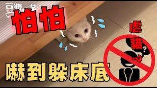 【豆漿 - SoybeanMilk】娘娘怕到龜縮在床底 連點心都不要!?
