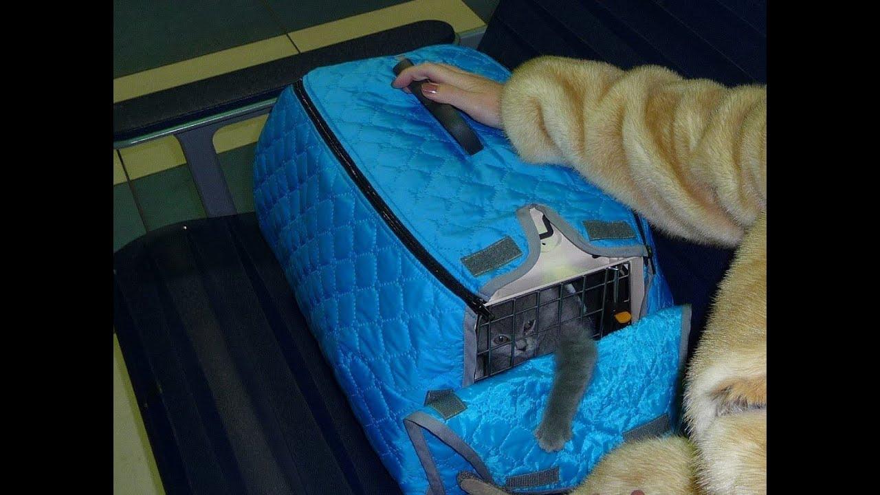 Слинг-сумка для кошек и собак средних пород до 15 кг из 100% хлопка, зеленая. 375 г 3 449 р бонус 52 · слинг-сумка для кошек и собак средних пород до 15 кг из 100% хлопка. Купить. 4lazylegs. Слинг-сумка для кошек и собак средних пород до 15 кг из 100% хлопка, серая. 375 г 3 449 р бонус 52.