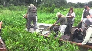 Amazonas hunting anaconda