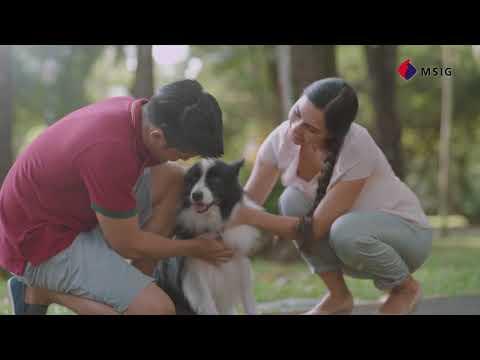 MSIG Pet Insurance
