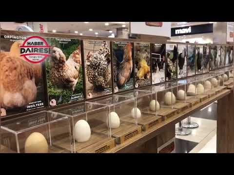 """Türkiye'de İlk! Yumurta Sergisi Koleksiyonu """"Dünya Tavukları Ve Yumurtalar Sergisi"""" Konya'da Açıldı"""