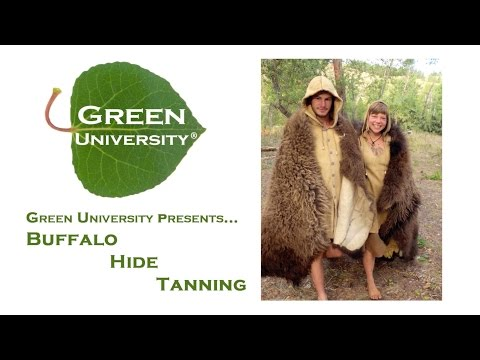Buffalo (Bison) Hide Tanning: Braintanning a Buffalo Robe