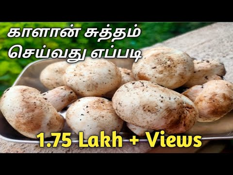 How to Cleaning Mushroom in Tamil