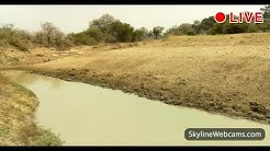 Live Webcam from Zambia - African Animals