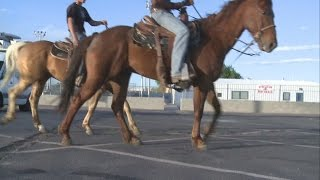 Students suspended after riding horses to school