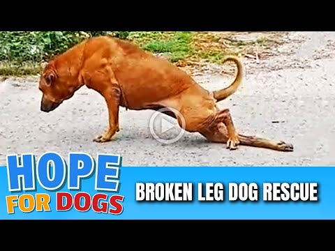 Hope Rescues Dog With Broken Leg
