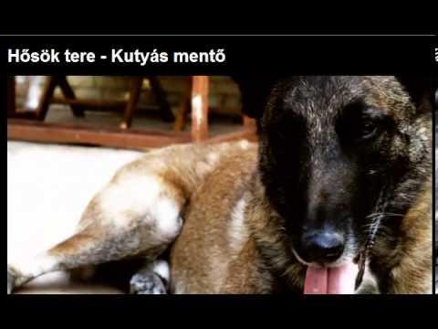 ORIGO ITTHON - Hős kutyák