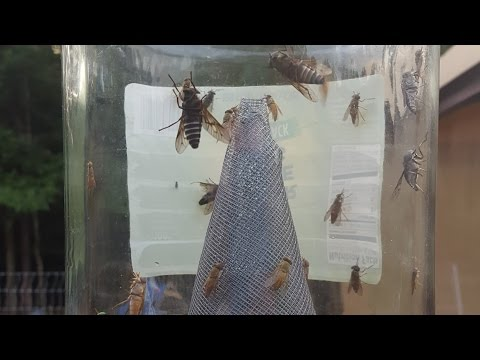 Horse Flies: How to Get Rid of Flies - No Chemicals, No Electricity