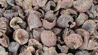 Good Health: Teens caught chewing betel nut