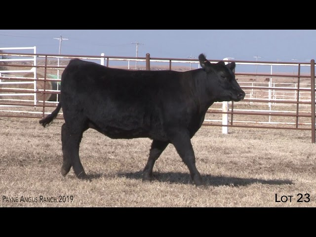 Payne Angus Ranch Lot 23