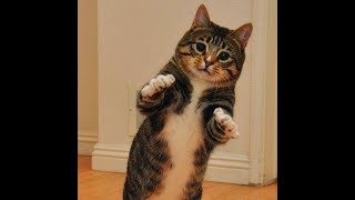 Танцы забавных котят за стеклом