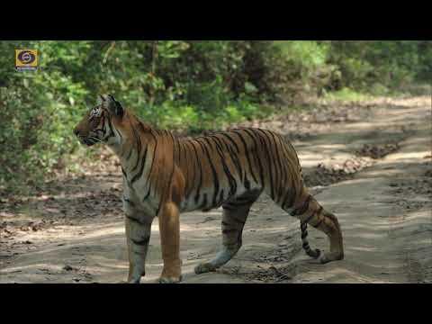 Good Evening India I Corbett Tiger Reserve: Tourist Facilities