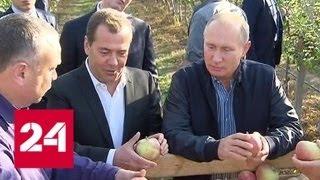 Смотреть видео Путину и Медведеву показали на Ставрополье яблоневые сады - Россия 24 онлайн