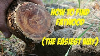How to find Fatwood (The easiest way)