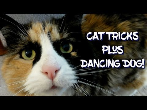 Cat Tricks plus Dancing Dog!