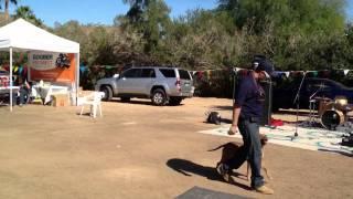 Lorenzo's Dog Training Team Demonstration