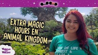 FLIGHT OF PASSAGE EN EXTRA MAGIC HOUR DE ANIMAL KINGDOM - DESAYUNO EN YAK & YETI - DISNEY WORLD 2019