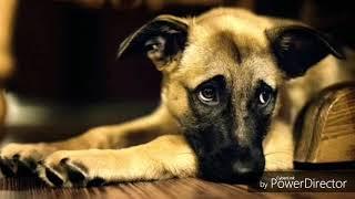 Как повысить иммунитет у собаки?