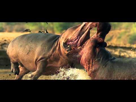 Discover Uganda 3 minute trailer 1080p